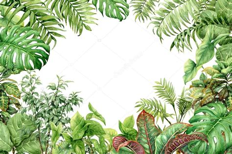 plant background watercolor green background with tropical plants stock