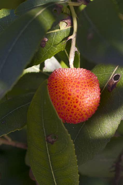 7 fruit tree fruit tree nurseries in ct thenurseries
