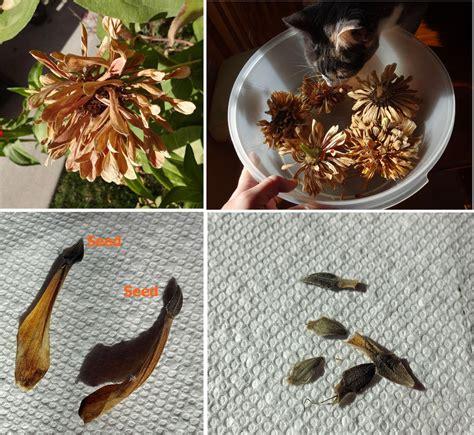 boise daily photo garden shot october 2013