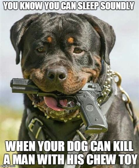 can dogs attacks image tagged in holstered attack dogs dogs imgflip
