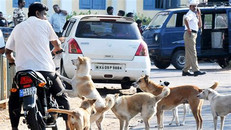 how to a stray how to stray population of mysore
