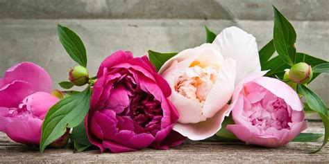 Home Decor Flowers the history of peonies central square florist