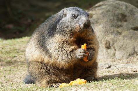 groundhog day repeat each time meaning groundhog day repeat 28 images groundhog day will