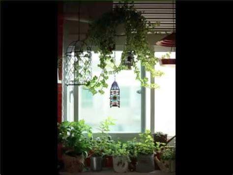 indoor hanging plants window indoor house  office