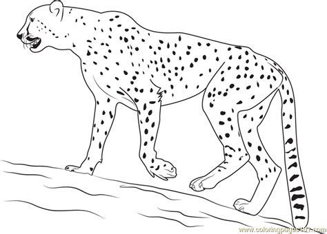 Walking Cheetah Coloring Page Free Cheetah Coloring Cheetah Color Page