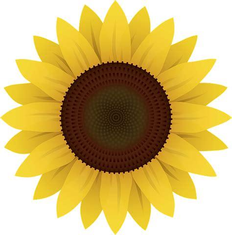 flowers sunflower plants  vector graphic  pixabay