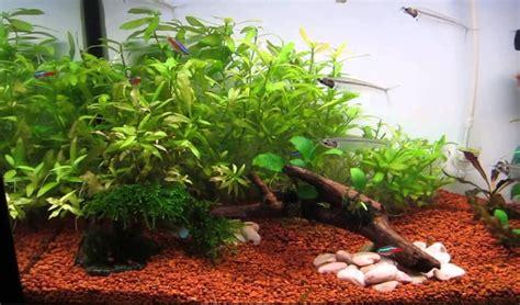 Hiasan Akuarium Tanaman Akuarium Plastik 25 jenis tanaman aquascape bagus untuk akuarium