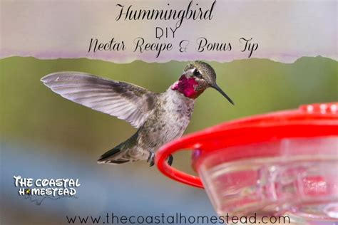 diy hummingbird nectar recipe bonus tip the coastal