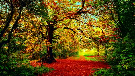 google images of fall autumn google pretraživanje we heart it