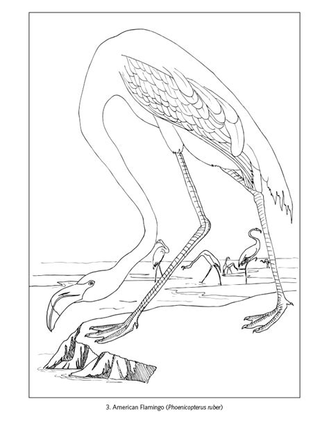magpie bird coloring page flora and fauna coloring sheets short leg studio magpie