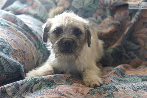 pugapoo puppies pugapoo puppy for sale near philadelphia pennsylvania 98135d50 e251