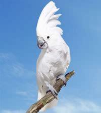 imagenes de guacamayas blancas loros tienda de loros venta de loros tienda de aves