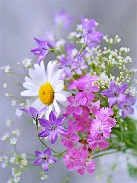 imagenes de flores otoñales las 25 mejores ideas sobre flores en pinterest flores