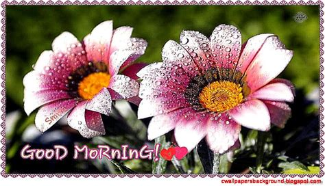 wallpaper flower morning flowers images with good morning wallpapers background