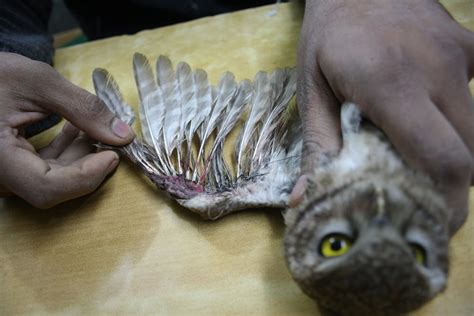 reports on save birds from kite string injuries globalgiving