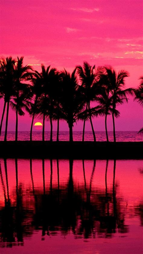 girly water wallpaper tumblr palm trees girly pink iphone plus wallpaper tumblr