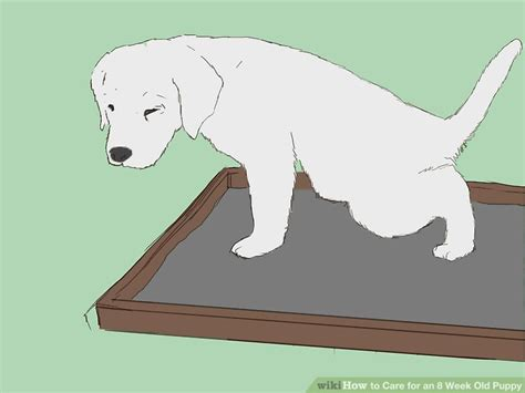 8 week puppy care how to care for an 8 week puppy with pictures wikihow