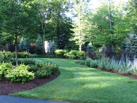 trees  shrubs   natural privacy fence