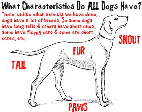 characteristics of dogs big guide to drawing dogs puppies with basic shapes for how to draw