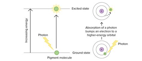 the absorption of light by photosynthetic pigments worksheet answers the absorption of light by photosynthetic pigments
