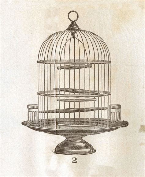 vintage clip art victorian bird cage graphics fairy