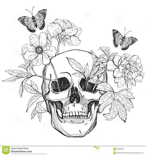 Crâne, Fleurs Et Papillon Illustration de Vecteur   Image