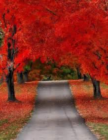 beautiful fall color fall autumn