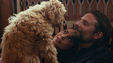 a star is born actor name bradley cooper cast his own dog in a star is born variety