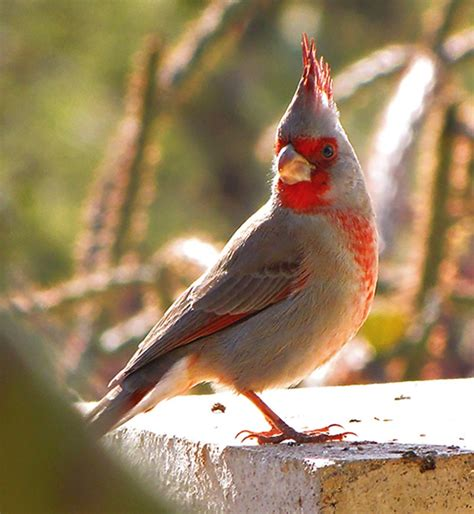 will climate change impact bird watching in south texas