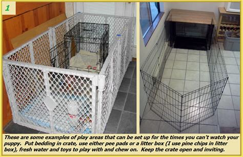 how to crate potty a puppy potty your puppy valor goldens