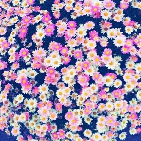 imagenes tumblr flores tumblr flores fondo imagui