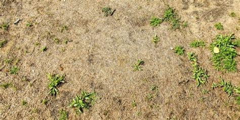 Wann S T Rasen 5350 by Verbrannter Rasen Was Tun Verbrannter Rasen Wie Rette Ich