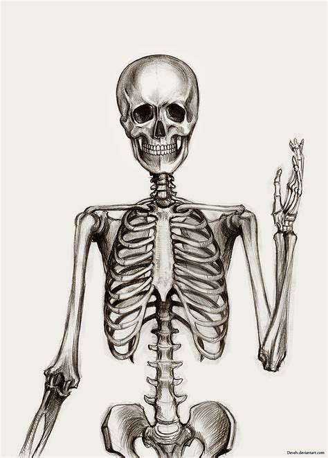 skeleton drawing google zoeken art for school