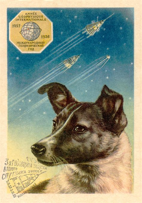 laika space laika a in space dodogs