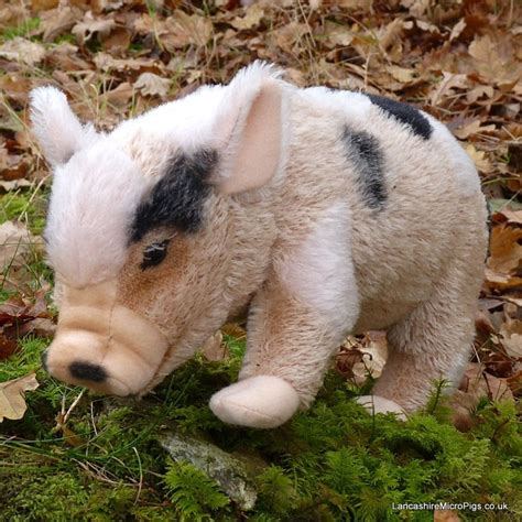 are teacup pugs real 12 best images about micro pig teacup pig toys on 41 quot back to and toys