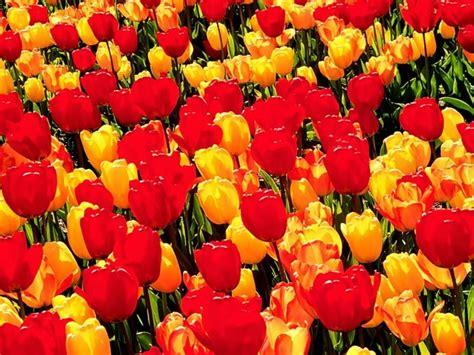 fiori the se volete dedicare un fiore a qualcuno aurorablu forum