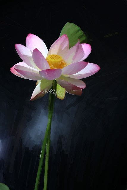Lotus Flower Painting Designs 17 Best Ideas About Lotus Flower Paintings On
