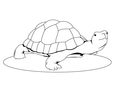 coloring page turtles printable free a turtle coloring pages
