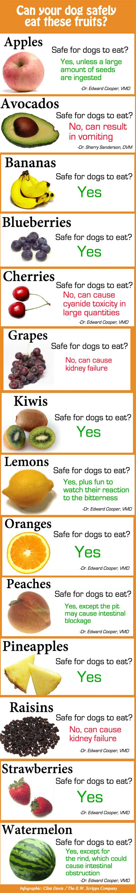 fruits dogs can eat can your safely eat these fruits beingstray
