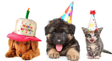 Birthday Surprises For Your Pet by 5 Pawsome Pet Birthday Ideas Paw Tenders