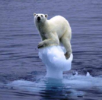 climate change causes animals to shrink climate change causes animals to shrink
