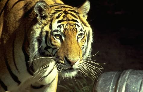 google images zoo animals hd animals zoo animals
