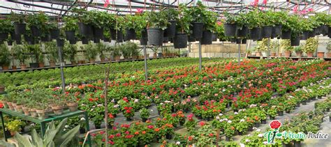vivai piante da giardino piante da esterno vivaio iodice matrimoni ed eventi