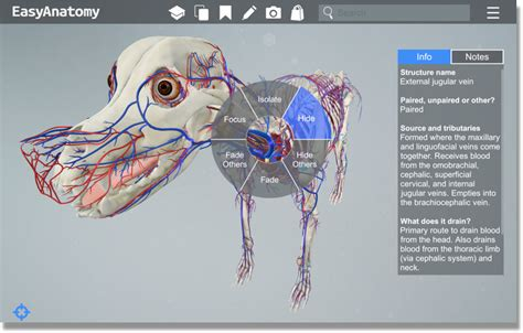 best anatomy software comparing the best veterinary anatomy study tools