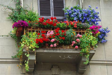 fiori sul terrazzo panoramio photo of i fiori sul balcone