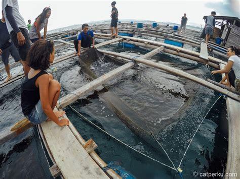 Timbangan Untuk Ikan bagan apung untuk budidaya ikan kerapu catperku