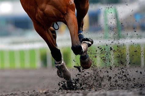 All Weather Surfaces For Horses racing ground matters part 3