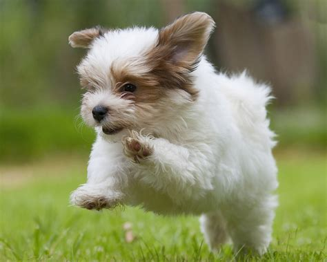 cute puppy hd wallpaper free download hd wallpapers dogs download latest cute puppy running hd wallpapers images of