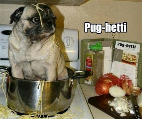 home cooked meals for my pug 57 best images about on bad dreams pug and haha
