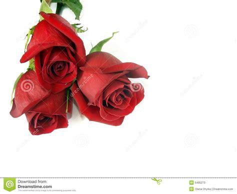 imagenes tres rosas ramo a partir de tres rosas rojas imagen de archivo